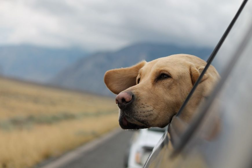 5 things to check before a road trip